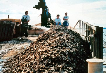 Oyster shell being washed overboard where it will settle on the bottom, making a new growing surface for oyter spat